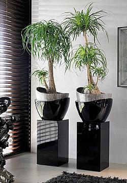 Die Perfekte Zimmerpflanze Fur Giessfaule