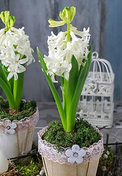 was wenn die zwiebelblumen verbl ht sind. Black Bedroom Furniture Sets. Home Design Ideas
