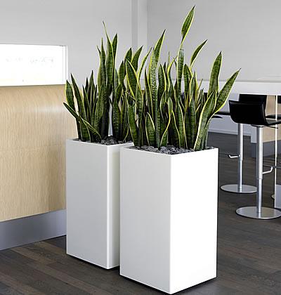 pflanzenfamilie. Black Bedroom Furniture Sets. Home Design Ideas
