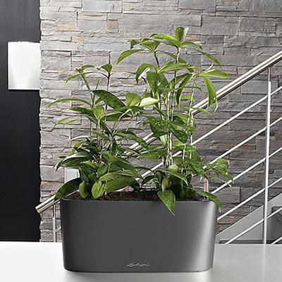 was spricht f r pflanzengef sse von wyss. Black Bedroom Furniture Sets. Home Design Ideas