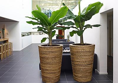 Gef sse innenbereich sortiment wyss for Pflanzen innenbereich