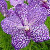 orchideen ohne erde